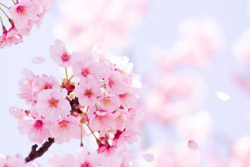 【春のアップデート】まず気をつける2つのこと 2017