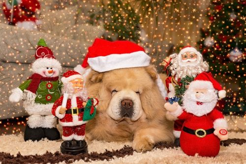 christmas-3037119_640